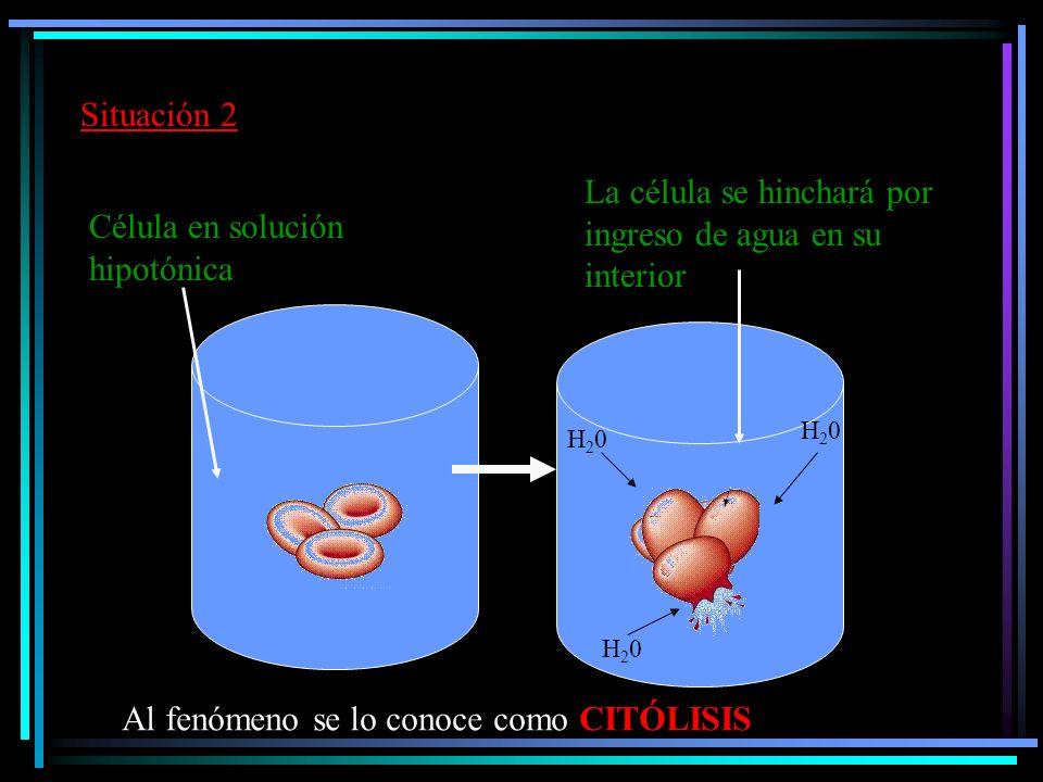 La célula se hinchará por ingreso de agua en su interior