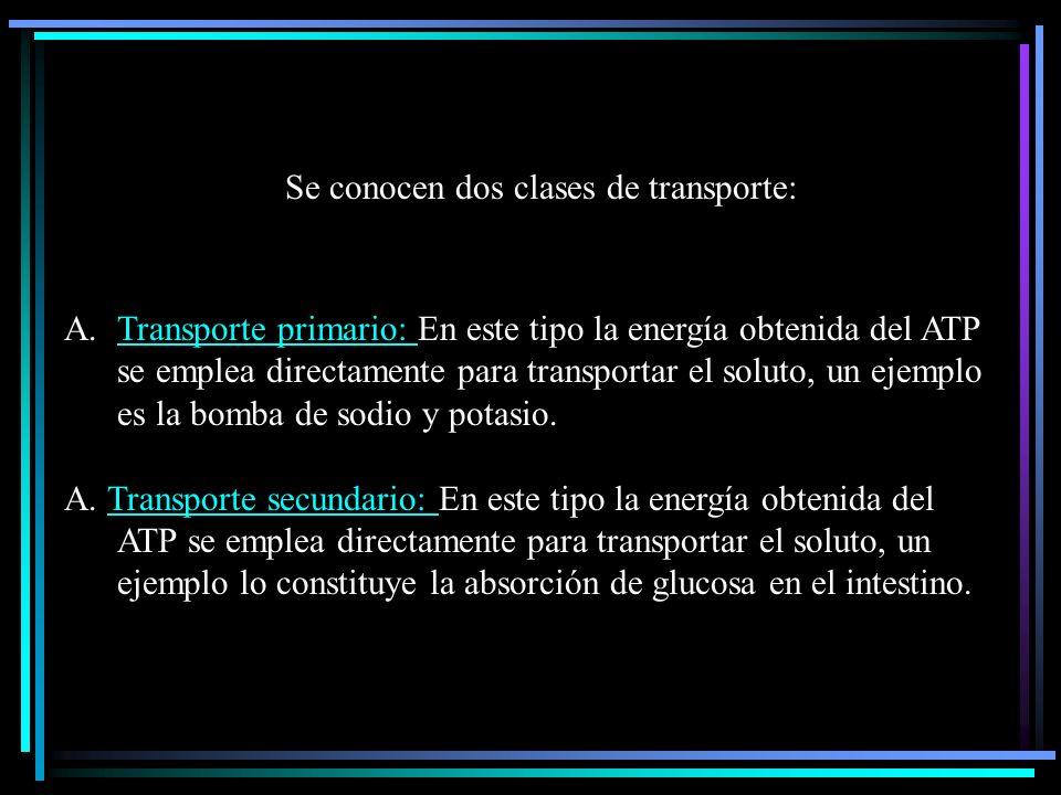 Se conocen dos clases de transporte: