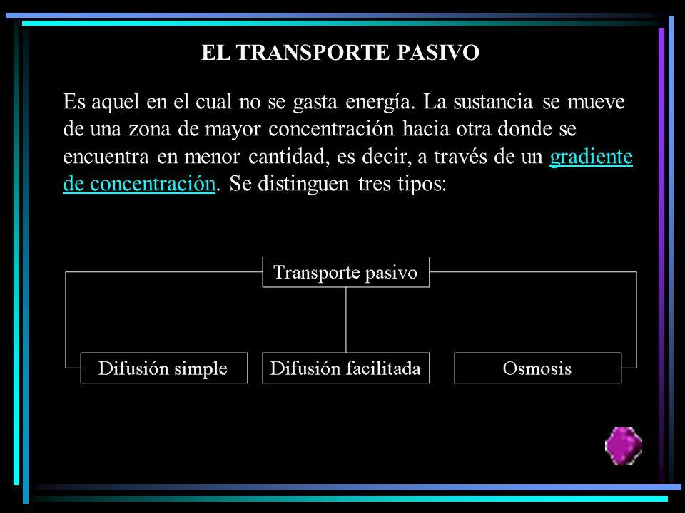 EL TRANSPORTE PASIVO