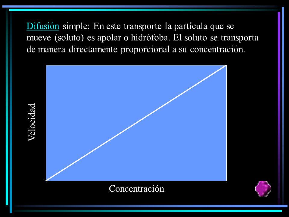 Difusión simple: En este transporte la partícula que se mueve (soluto) es apolar o hidrófoba. El soluto se transporta de manera directamente proporcional a su concentración.