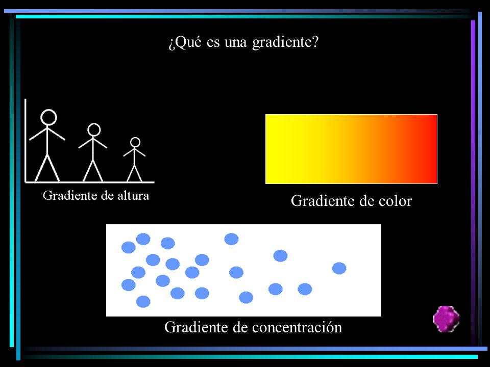 ¿Qué es una gradiente Gradiente de color Gradiente de concentración