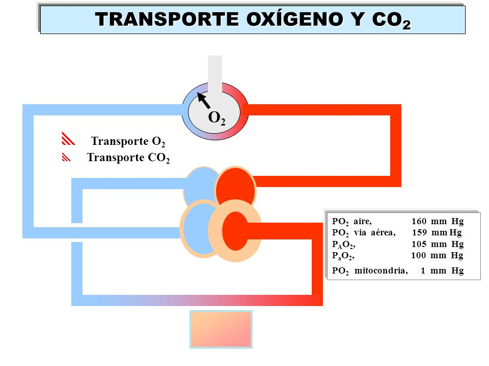 TRANSPORTE OXÍGENO Y CO2