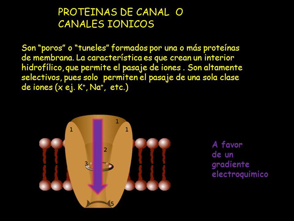 PROTEINAS DE CANAL O CANALES IONICOS