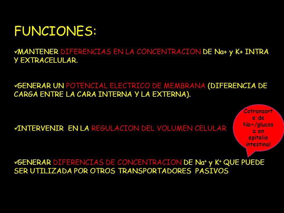 Cotransorte de Na+/glucosa en epitelio intestinal