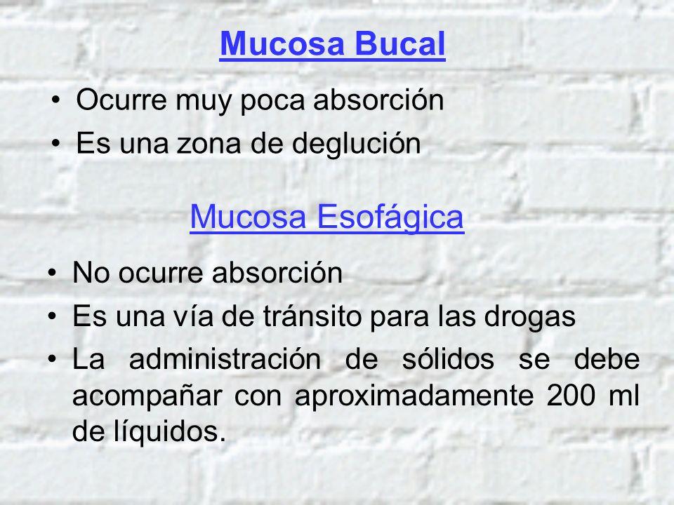 Mucosa Bucal Mucosa Esofágica Ocurre muy poca absorción