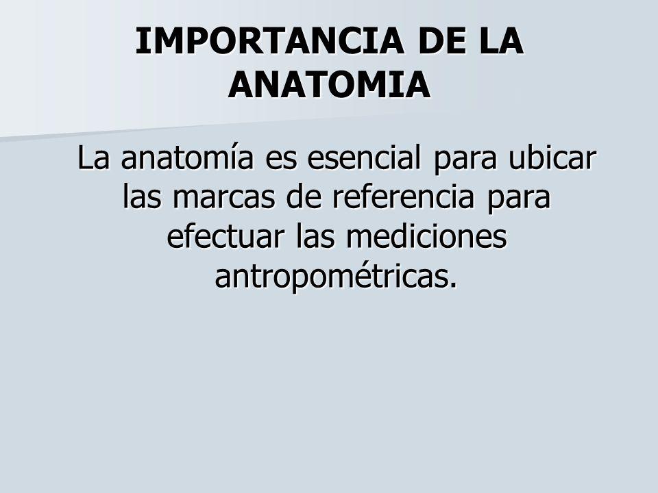Contemporáneo Importancia De La Anatomía Foto - Imágenes de Anatomía ...