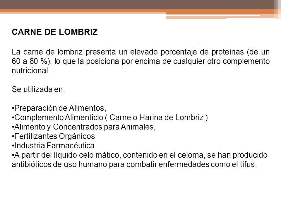 CARNE DE LOMBRIZ