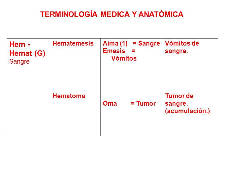 Vistoso Anatomía Lista De Terminología Inspiración - Imágenes de ...