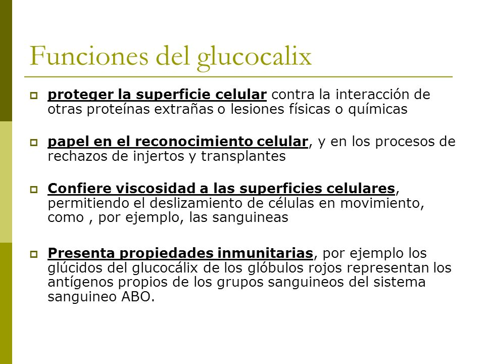 Funciones del glucocalix
