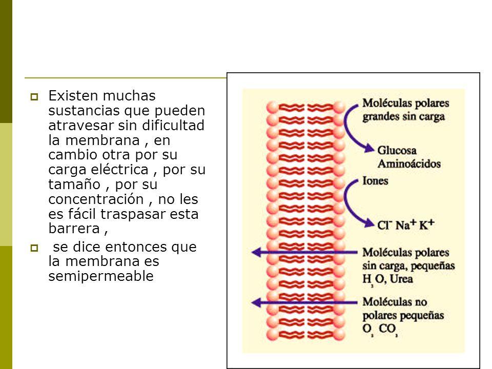 Existen muchas sustancias que pueden atravesar sin dificultad la membrana , en cambio otra por su carga eléctrica , por su tamaño , por su concentración , no les es fácil traspasar esta barrera ,