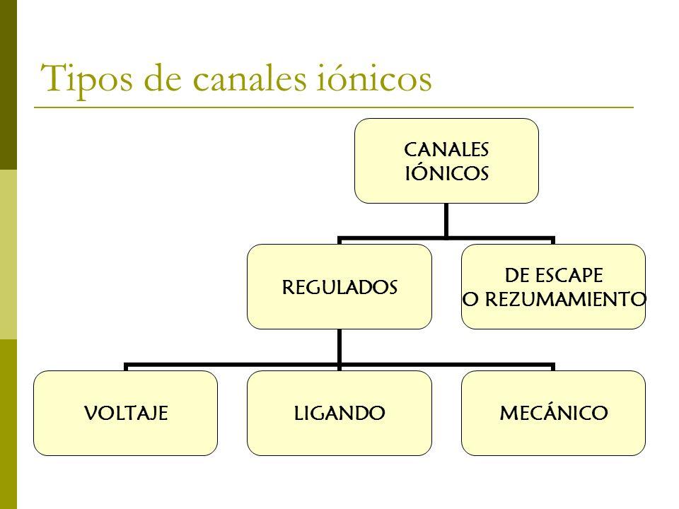 Tipos de canales iónicos