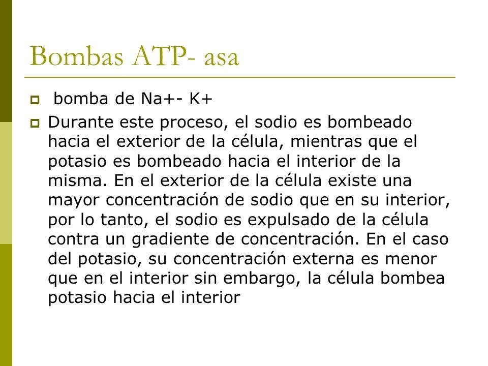 Bombas ATP- asa bomba de Na+- K+