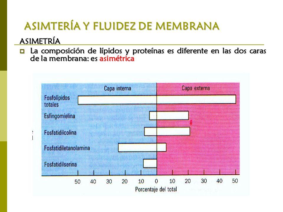 ASIMTERÍA Y FLUIDEZ DE MEMBRANA