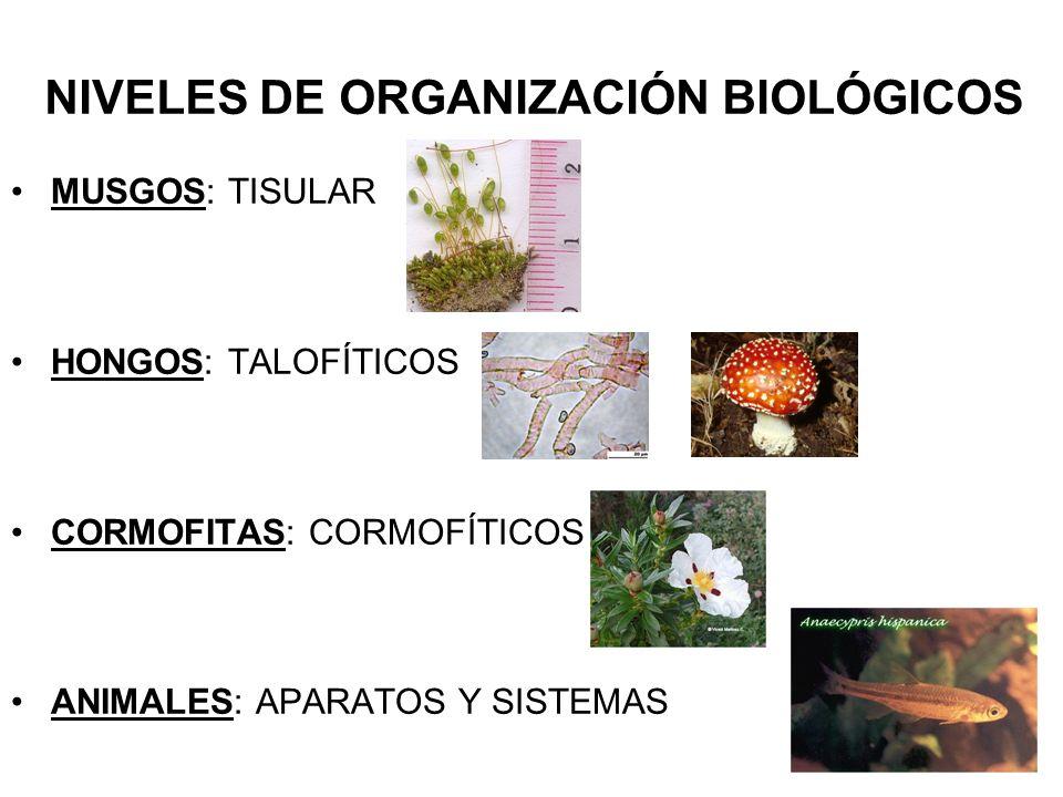 NIVELES DE ORGANIZACIÓN BIOLÓGICOS