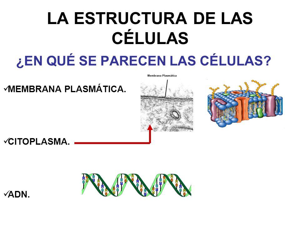 LA ESTRUCTURA DE LAS CÉLULAS