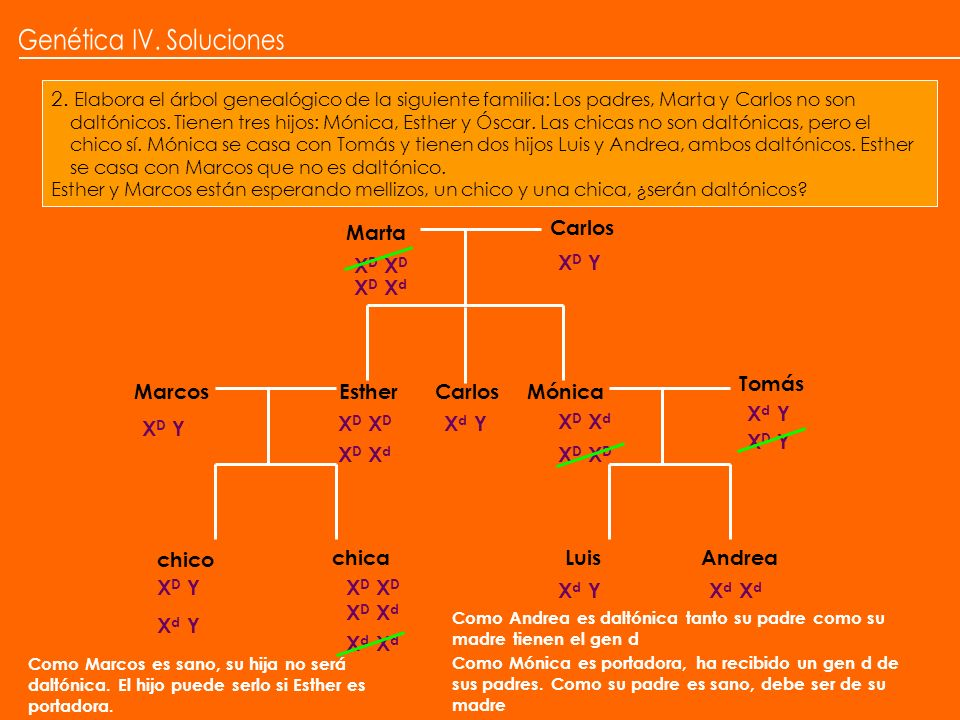 Genética IV. Soluciones