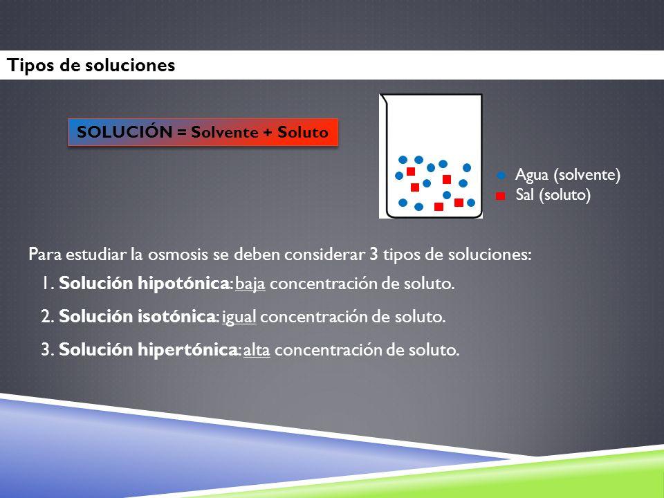 SOLUCIÓN = Solvente + Soluto