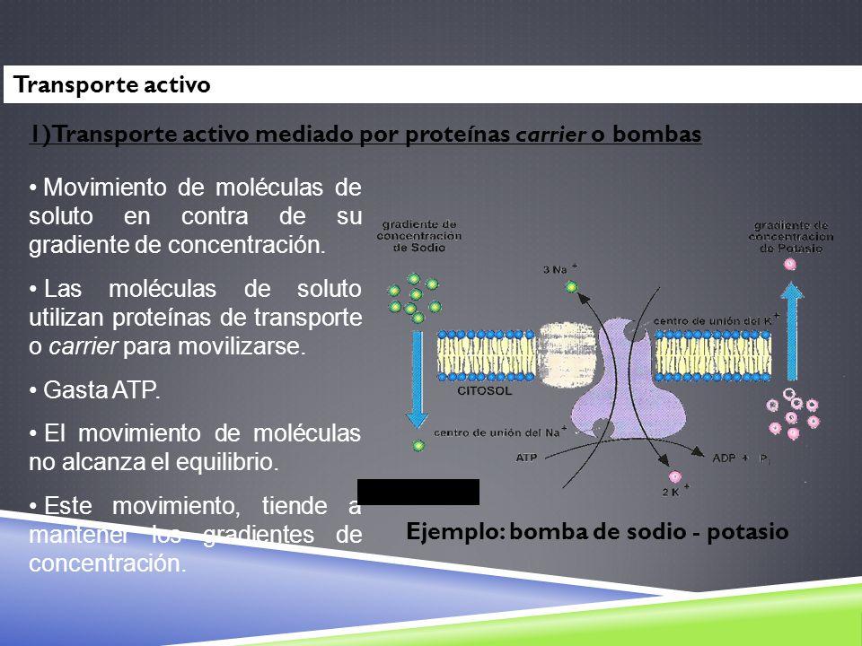 Transporte activo1)Transporte activo mediado por proteínas carrier o bombas.