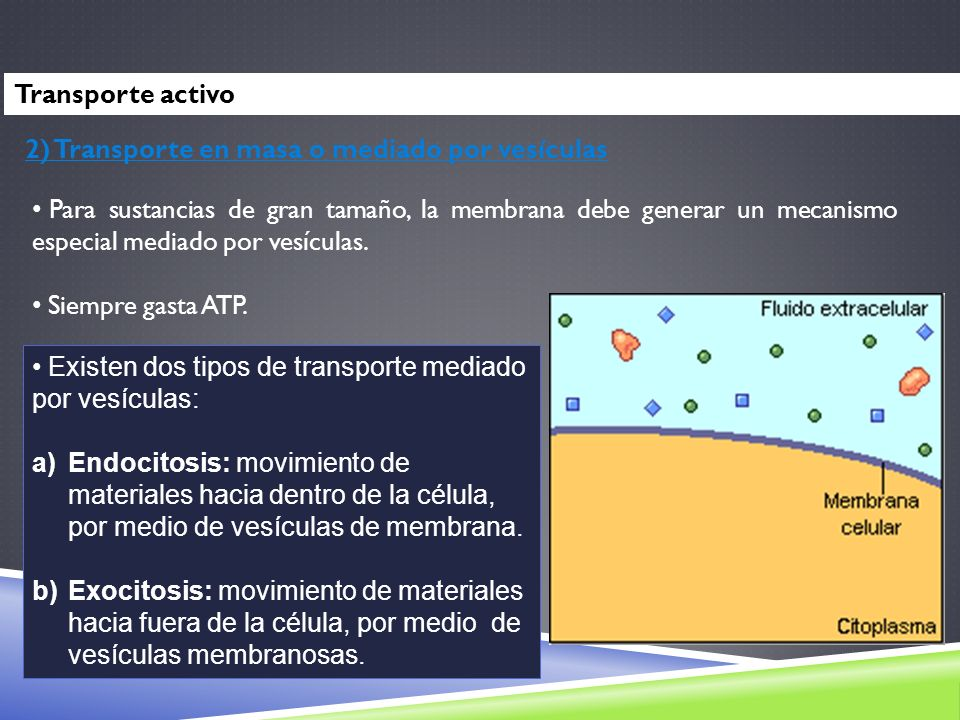 Transporte activo 2) Transporte en masa o mediado por vesículas.
