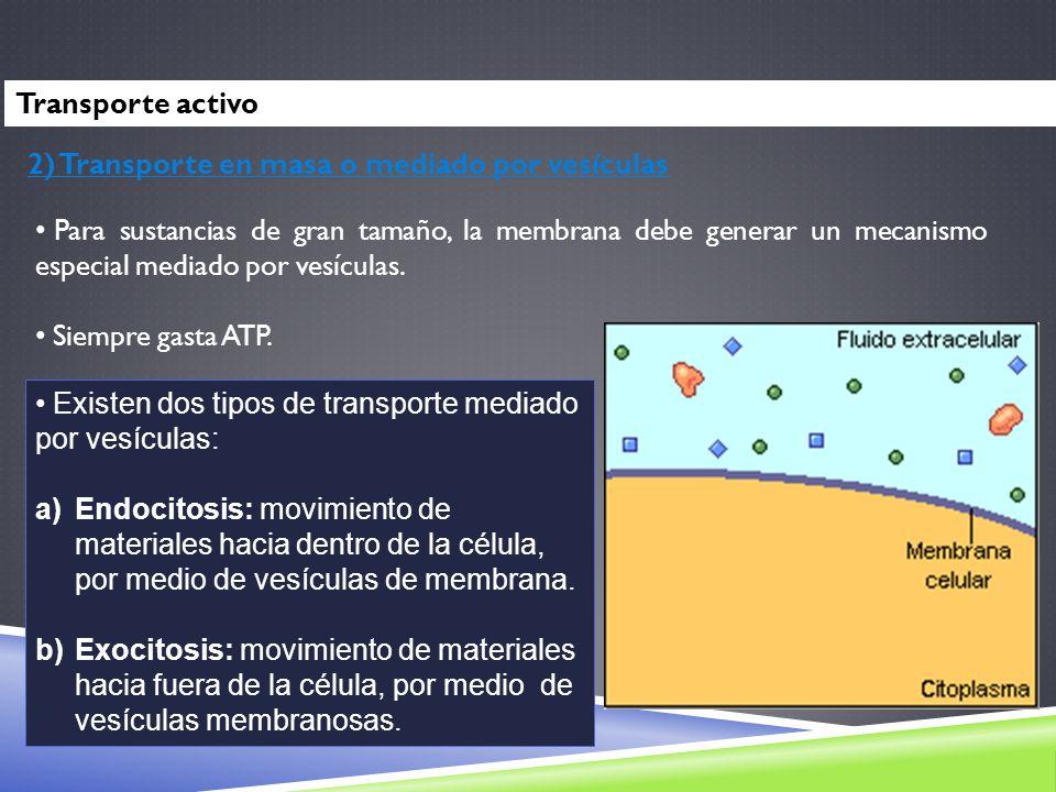Transporte activo2) Transporte en masa o mediado por vesículas.