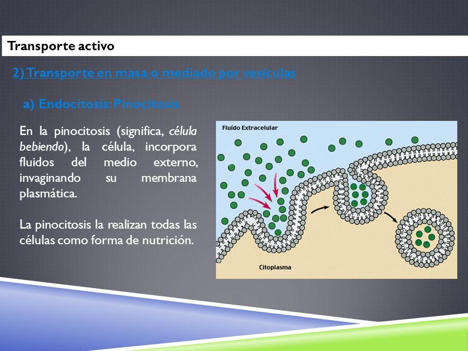 Transporte activo2) Transporte en masa o mediado por vesículas. a) Endocitosis: Pinocitosis.