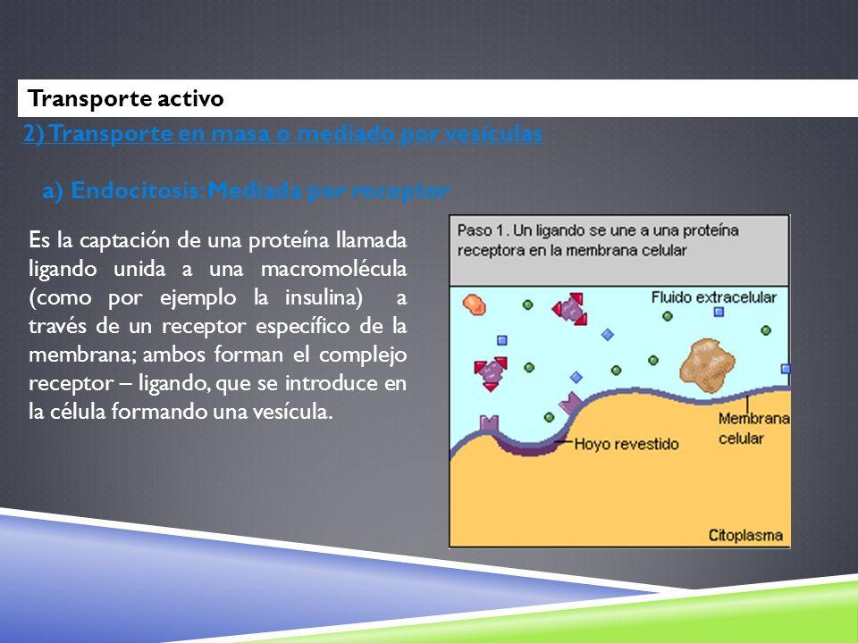 Transporte activo 2) Transporte en masa o mediado por vesículas. a) Endocitosis: Mediada por receptor.