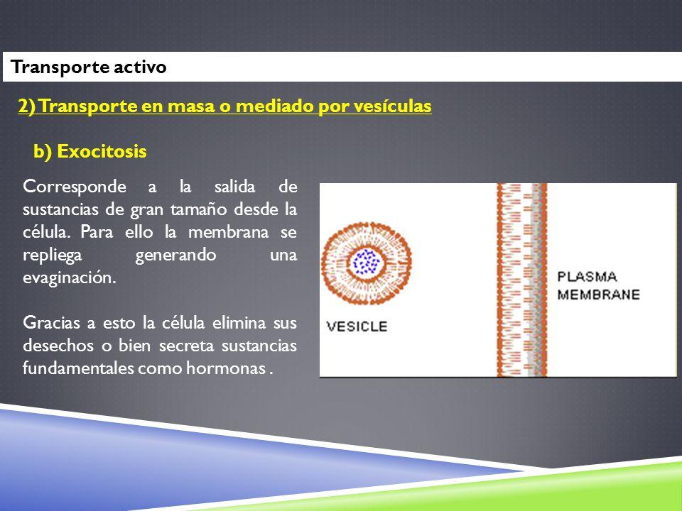 Transporte activo 2) Transporte en masa o mediado por vesículas. b) Exocitosis.