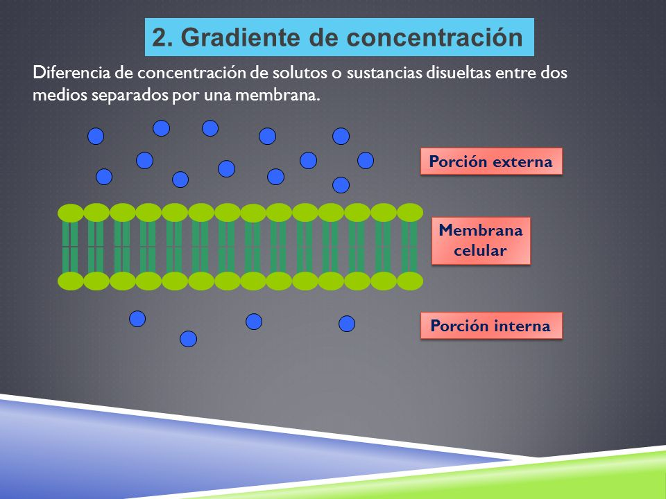2. Gradiente de concentración