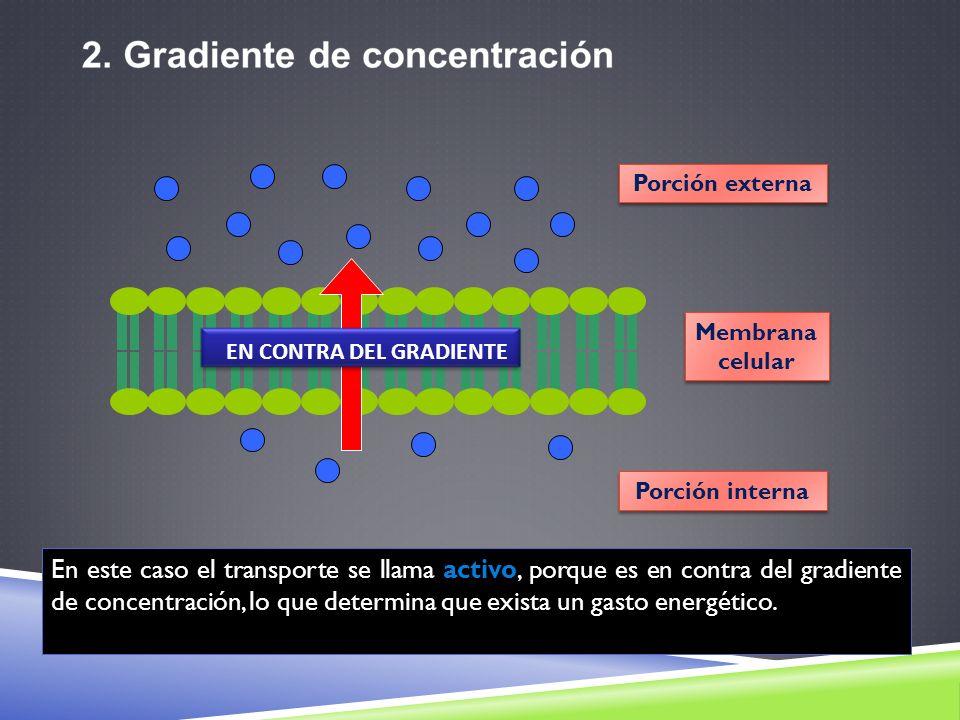 Porción externa Membrana. celular. EN CONTRA DEL GRADIENTE. Porción interna.