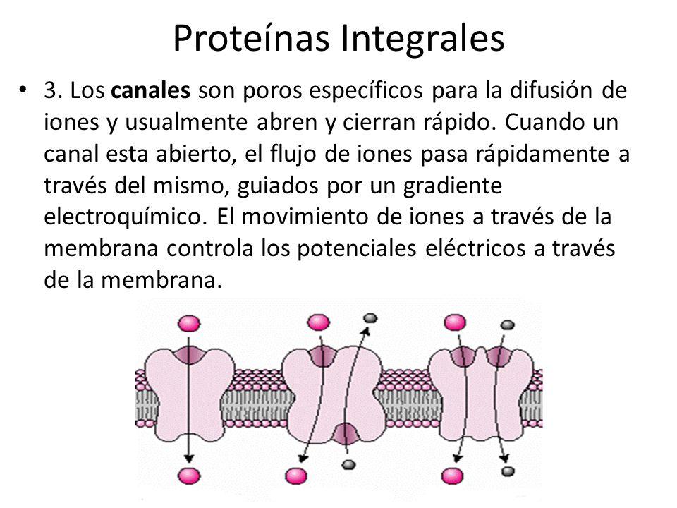 Proteínas Integrales