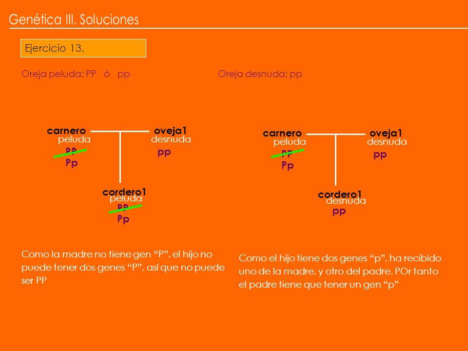 Genética III. Soluciones