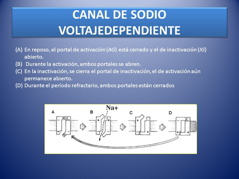 CANAL DE SODIO VOLTAJEDEPENDIENTE