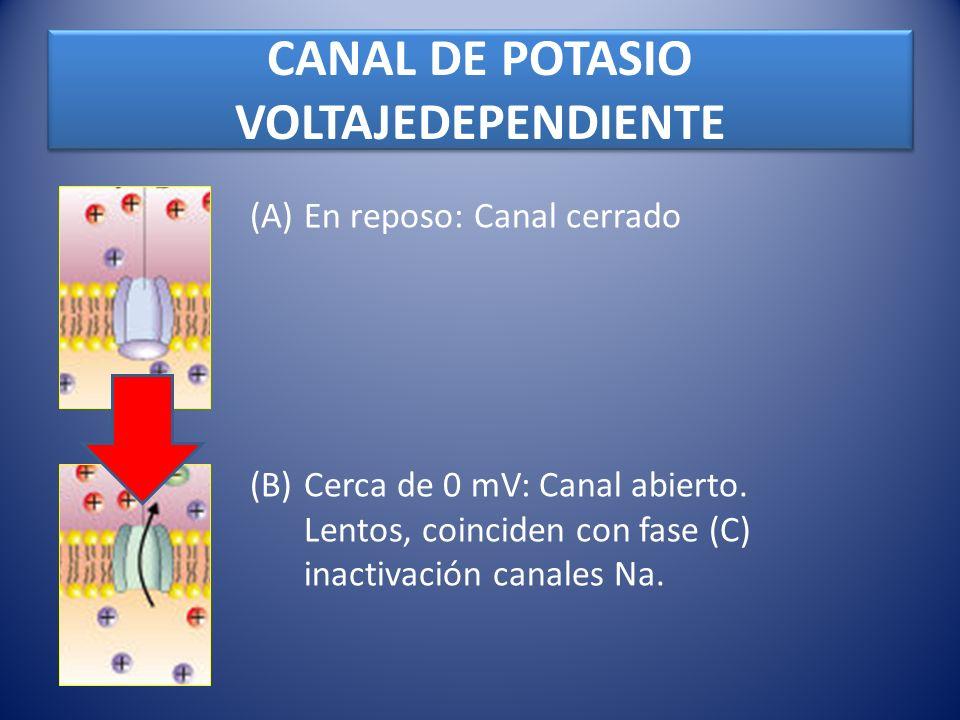CANAL DE POTASIO VOLTAJEDEPENDIENTE