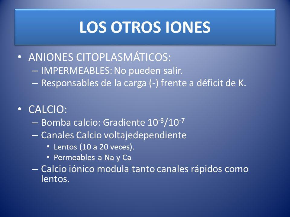 LOS OTROS IONES ANIONES CITOPLASMÁTICOS: CALCIO: