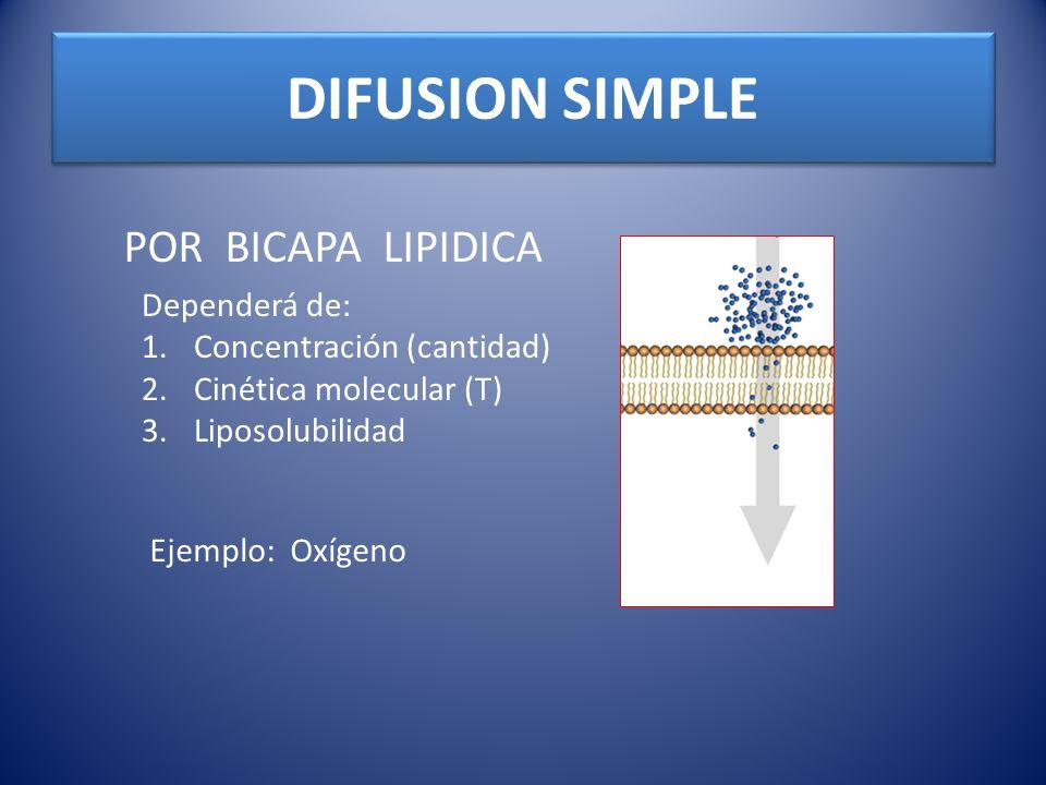 DIFUSION SIMPLE POR BICAPA LIPIDICA Dependerá de: