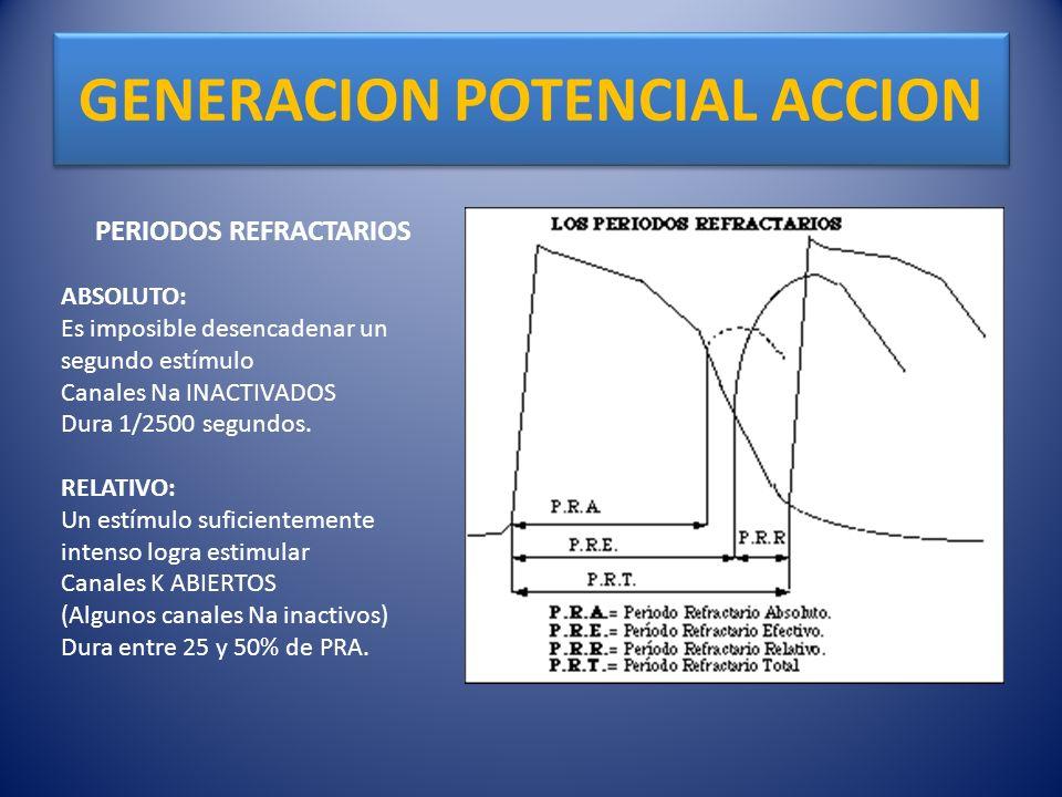 GENERACION POTENCIAL ACCION