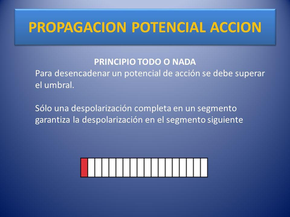 PROPAGACION POTENCIAL ACCION