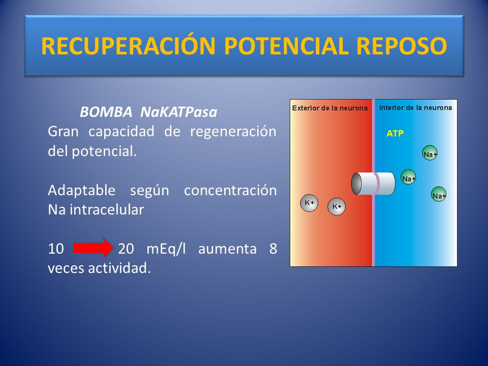 RECUPERACIÓN POTENCIAL REPOSO