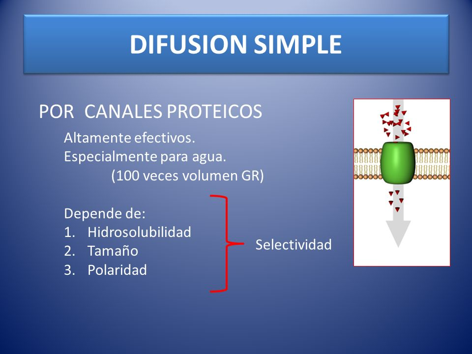 DIFUSION SIMPLE POR CANALES PROTEICOS Altamente efectivos.