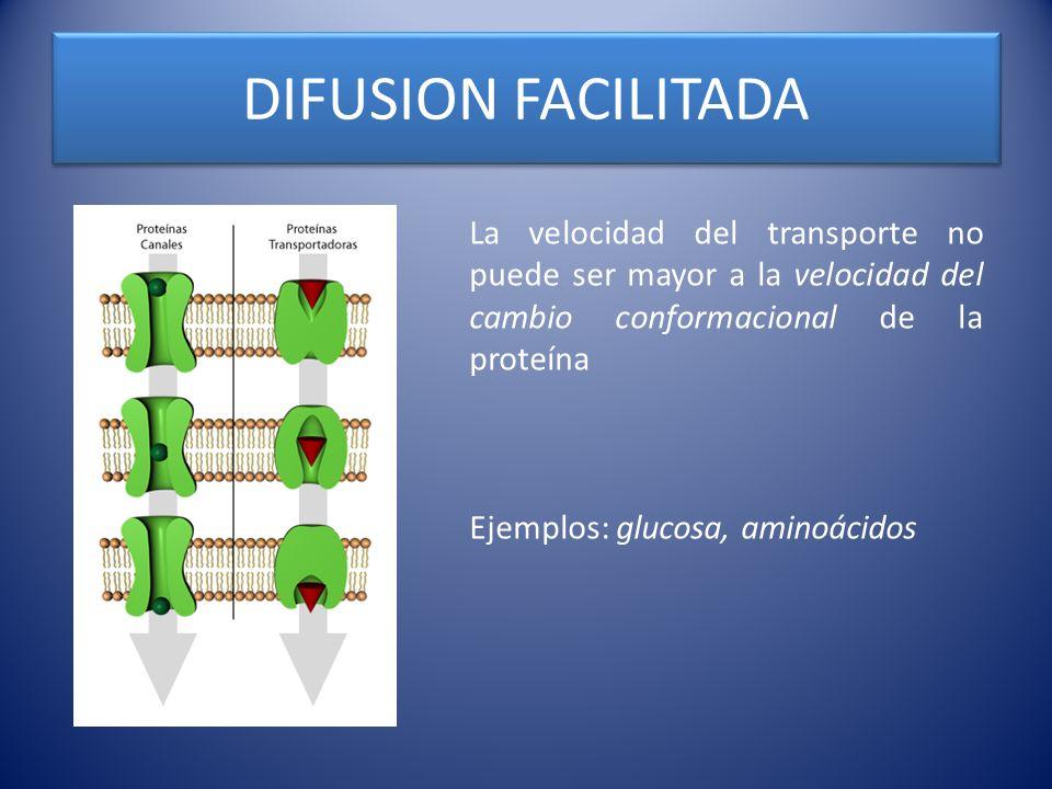 DIFUSION FACILITADALa velocidad del transporte no puede ser mayor a la velocidad del cambio conformacional de la proteína.