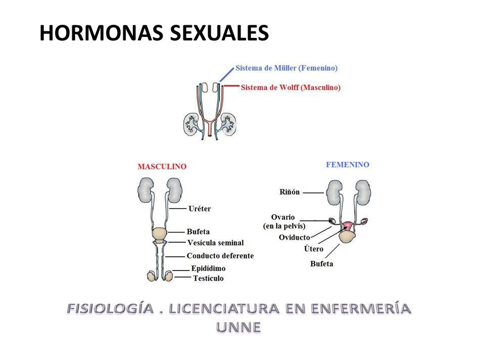Hormonas sexuales en crecimiento