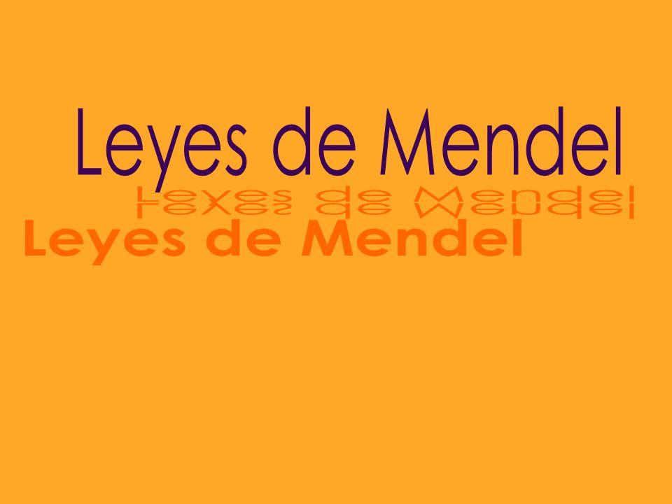 Leyes de Mendel Leyes de Mendel Leyes de Mendel Leyes de Mendel