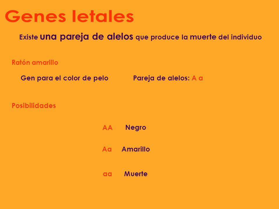 Genes letales Existe una pareja de alelos que produce la muerte del individuo. Ratón amarillo. Gen para el color de pelo.