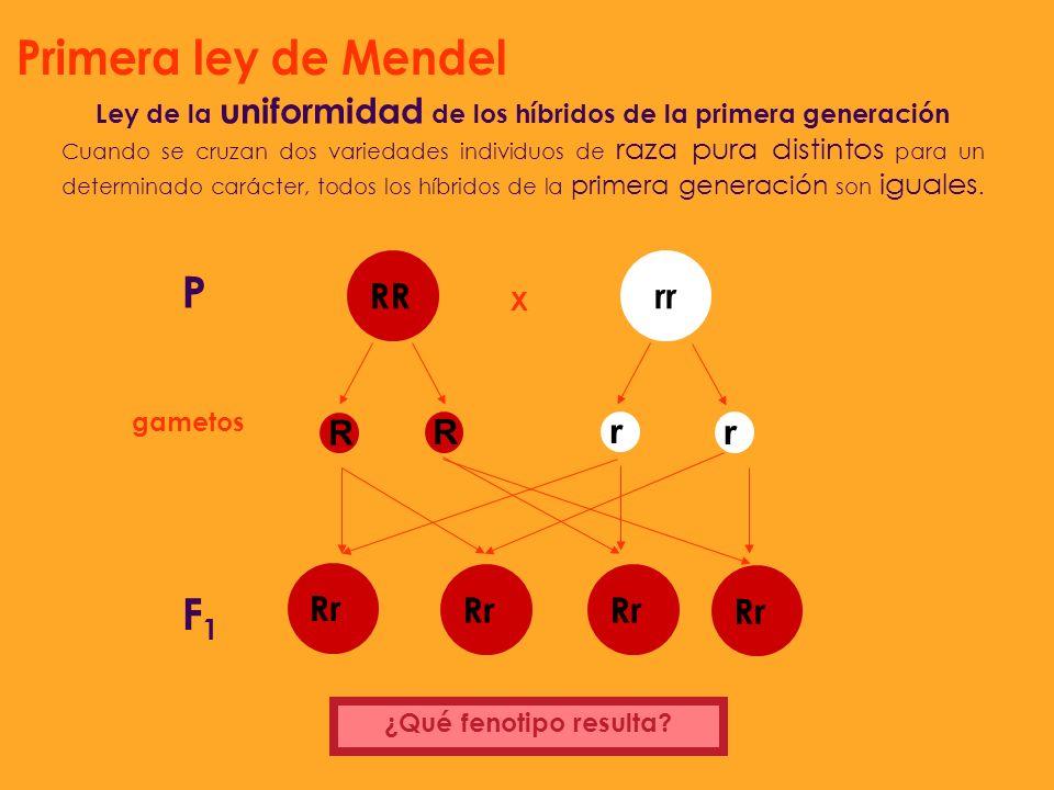 Ley de la uniformidad de los híbridos de la primera generación
