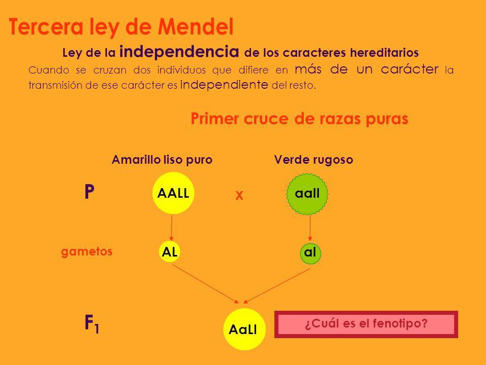 Ley de la independencia de los caracteres hereditarios