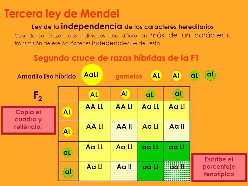 Tercera ley de Mendel F2 Segundo cruce de razas híbridas de la F1 AaLl