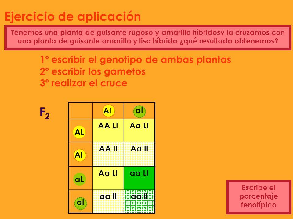 Ejercicio de aplicación Escribe el porcentaje fenotípico