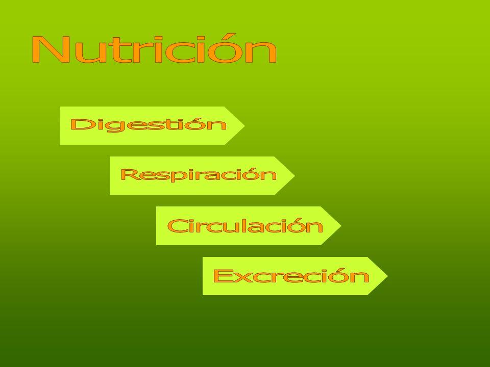 Nutrición Digestión Respiración Circulación Excreción