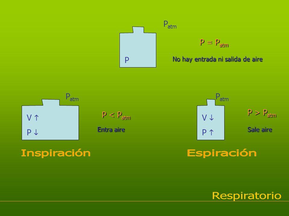 Inspiración Espiración Respiratorio Patm P = Patm P Patm Patm