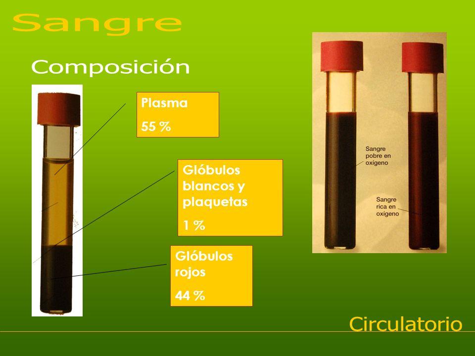 Sangre Composición Circulatorio Plasma 55 %